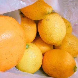 島の特産品のみかんやレモン